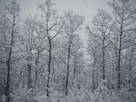 The White Forest. by Matt-Starr
