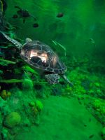 turtle stock 01 by hp-abrasion