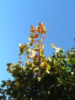 Autumn6: Look Up by brego