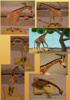 Zoo Tycoon Paper Collection - Reticulated Giraffe by DrWheelieMobile