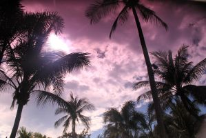 Palm Trees In The sky by loudboxball