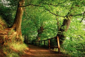 Belvoir Forest Path in Summer by Gerard1972