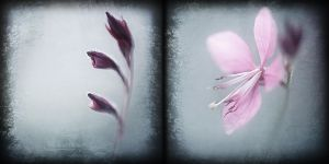 Metamorphose by Cristel-m