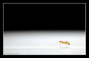 Ant by Alexbalix