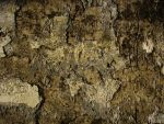 texture_04 by Chinese-stock