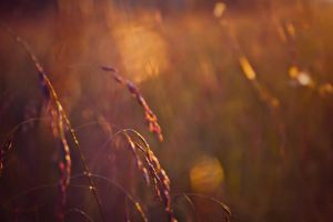 Spun Gold by KatieLindPhotography