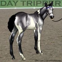 MD Day Tripper by wideturn