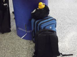 Ducky Goes with Me by Valerie-heika