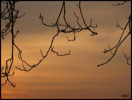 Branches by DropOfTime