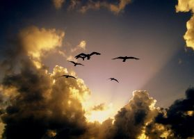 Sunset Birds by JustMarDesign