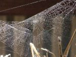 Spider Web by Oh-A-Journey