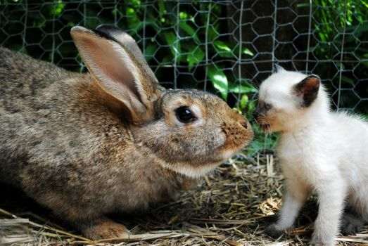 My kitten and Sunny Bunny! by Isabel--Mattig