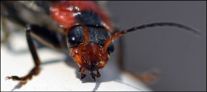 Insect1 by FrankAndCarySTOCK