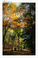 Under the trees by ShlomitMessica
