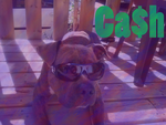 Cash is a Cool Dude by RaeNiccals1