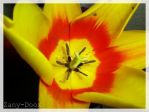 Flower_redandyellow by Zany-Doox