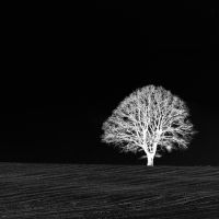 white tree by augenweide
