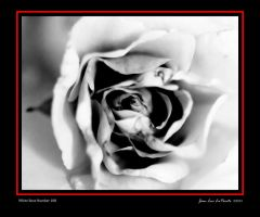 White Rose Number 188 by JeanLuc44