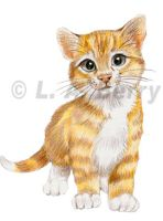 Orange Tabby Kitty by bigcatdesigns