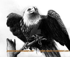 BALD EAGLE -- TWO GUYS ONE DRAWING WITH SPEEDART by GooseManator