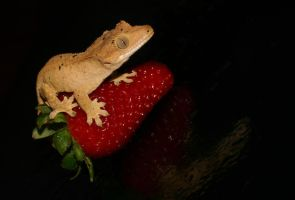 Surfing on a strawberry by AngiWallace