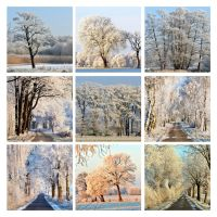 For Now I am Winter by augenweide