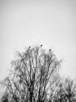 blackbirds singing in the dead of night by electriclover