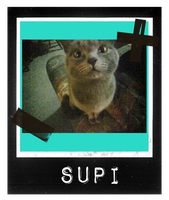 Supi by i-love-my-pet