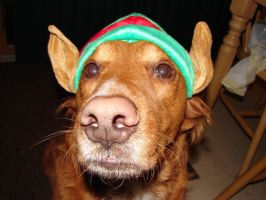 Tails Christmas Elf Dog 3 by FantasyStock