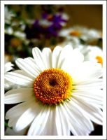 Flower. by Nastiona