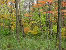 Busey Woods 855 by devianb