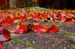 leafs on the ground by ProbablyThePenguin