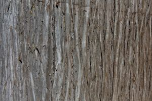 Tree Bark2 .:stock:. by PixlPhantasy