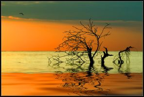 Flight by IgorLaptev