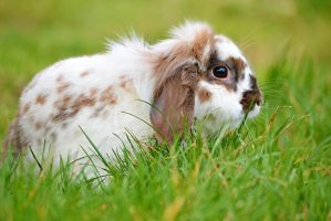 rabbit in the garden by SvitakovaEva