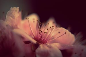 Blossom by BaiMilPhotography