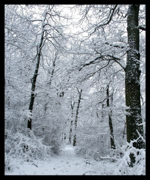 La foret blanche Snow_in_the_wood