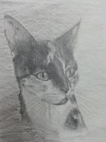 Portrait of My Cat by jaeminbahk