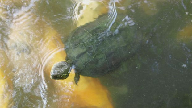 Turtle Bro by InternetScout
