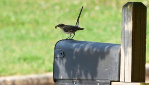 Gotta feed my mailbox protector 7-4-14 by Tailgun2009