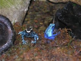 poisonous tree frogs 1 by gizmo666666