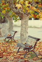 Fallen Leaves by Ana-D