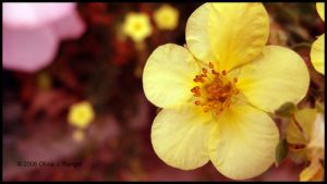 Flower Yellow by LadySarena