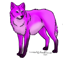 Coloured wolf by Reedflower101