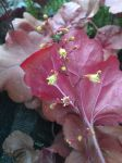 yellow flower, red leaf by Temaire