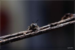 bee on a branch by mefisto0603