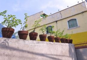 Potted Plants by ShipperTrish