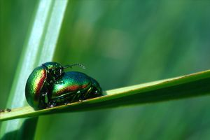 Copulating Beetles 4534310 by StockProject1