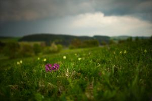 sambucina meadow by mescamesh