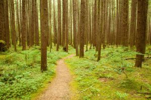 Forest Path through Trees by happeningstock